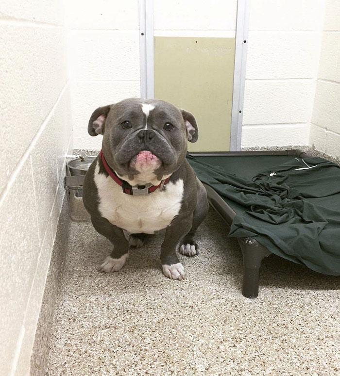 internet-helps-shelter-dog-find-home-mack-frank-tank-1-599426fd1e170__700