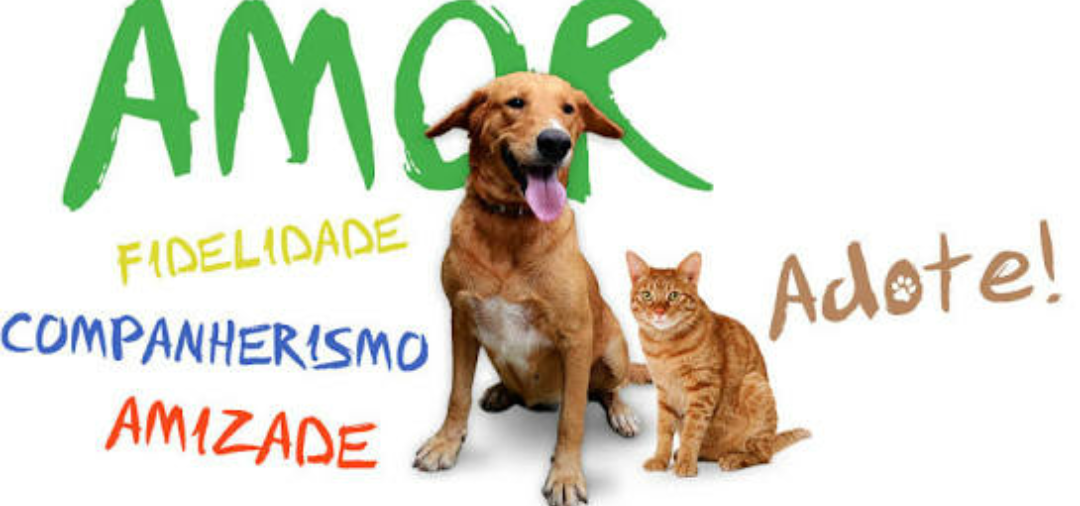 b009e9186766d  diamundialdaboação  adote  boaação  amoravida  debateanimal